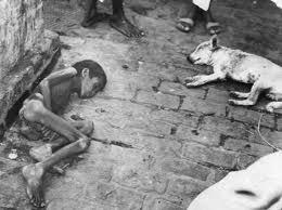 Người và giống vật chết vì đói