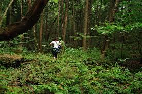 Khu rừng  Aokigahara để tự vận