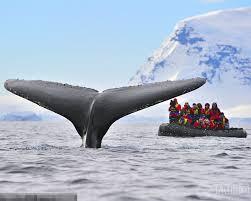 Đuôi cá voi